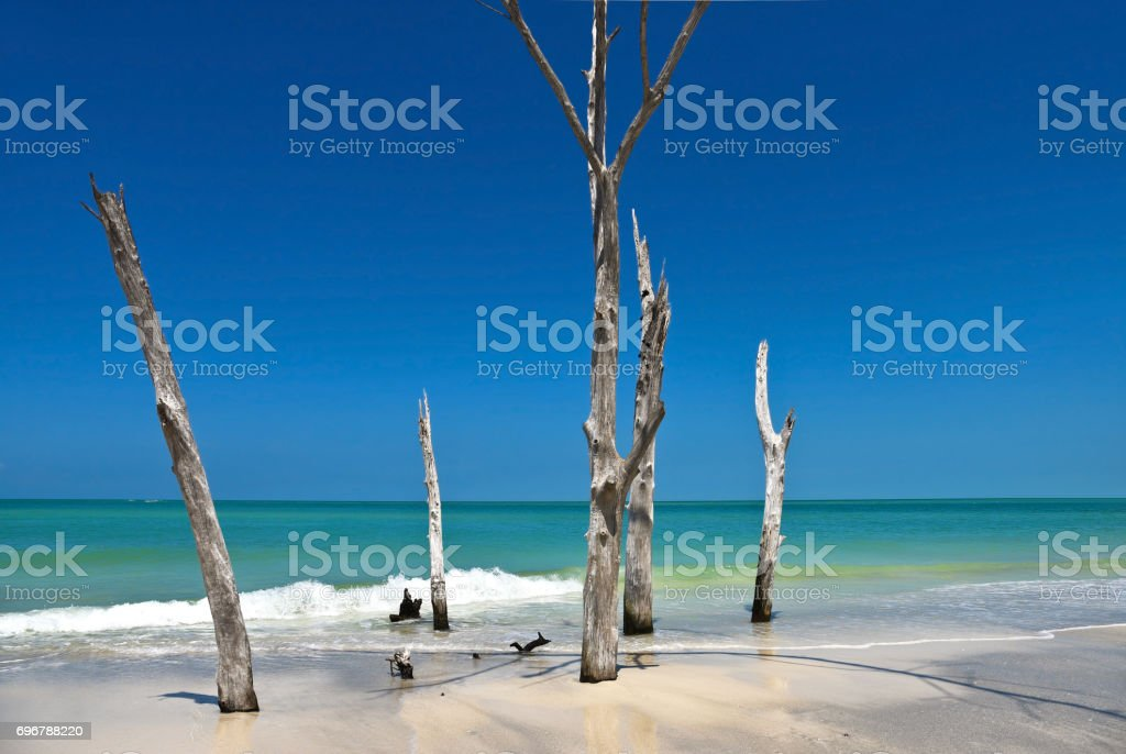 Beautiful Weathered Dead Trees stock photo