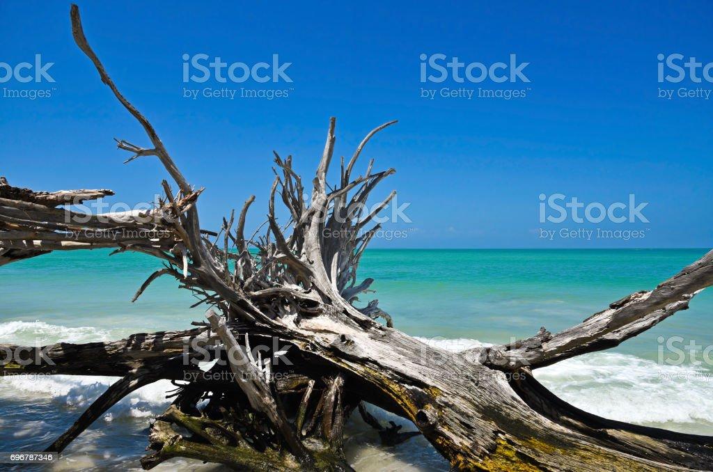 Beautiful Weathered Driftwood stock photo