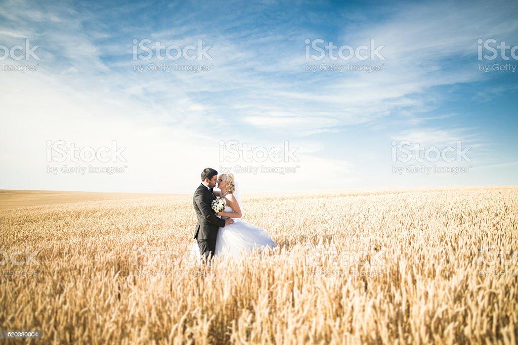 Piękny ślub para, Młoda para na pole pszenicy stwarzających zbiór zdjęć royalty-free