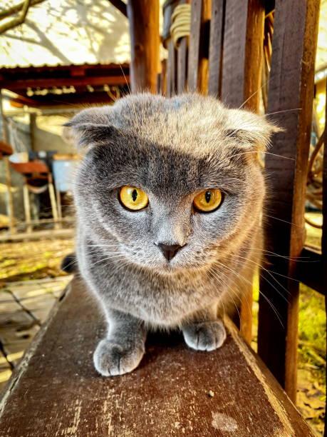 Beautiful wellgroomed domestic fluffy cat picture id1190644598?b=1&k=6&m=1190644598&s=612x612&w=0&h=nqhmdzly0t3dujgd88z5mxht6gz3cvu3i08ikhsqzdy=