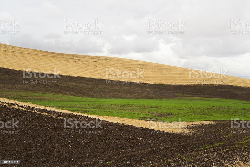 Beautiful Wheat Field royalty-free stock photo