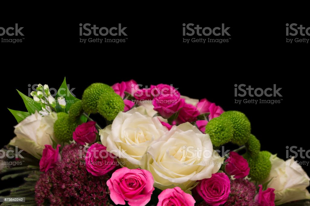 Beautiful white and pink roses isolated on black stock photo