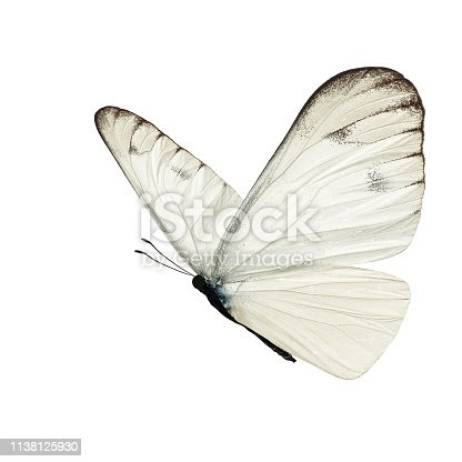 istock Beautiful white butterfly 1138125930