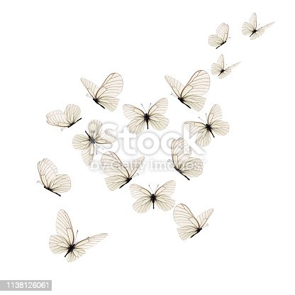 istock Beautiful white butterfly 1138126061