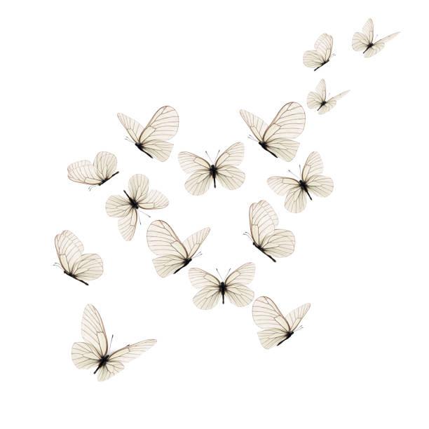 Beautiful white butterfly picture id1138126061?b=1&k=6&m=1138126061&s=612x612&w=0&h=dsthqdgs9e9iskpja4ehmnpjv8jt0ub0 9joiphob8m=