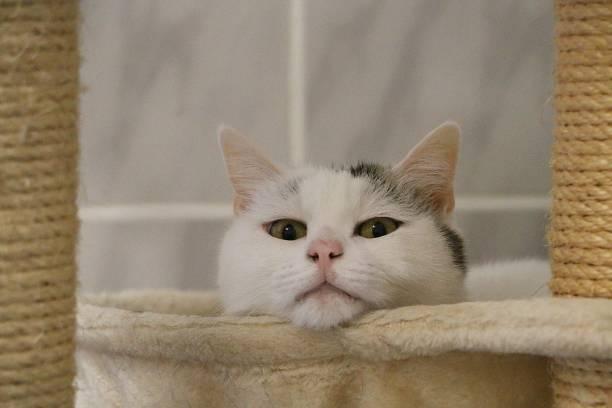 Schöne weiße Katze liegt auf einem Kratzpfosten – Foto