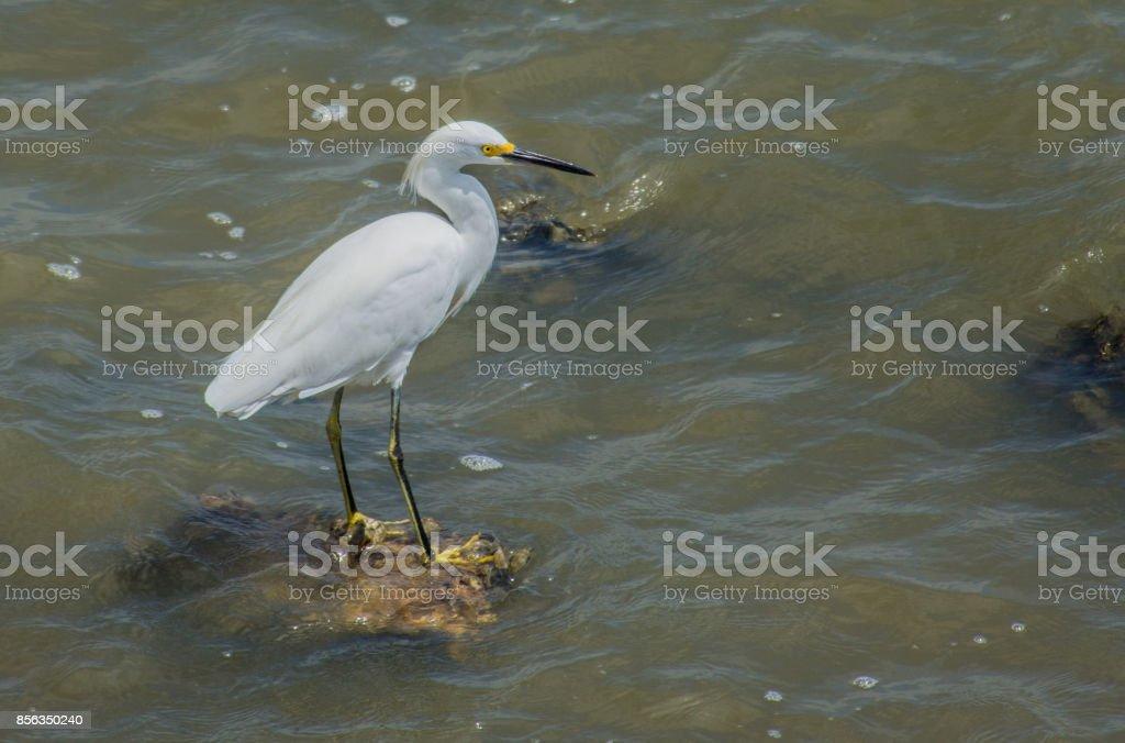 Beautiful White Egret Bird stock photo
