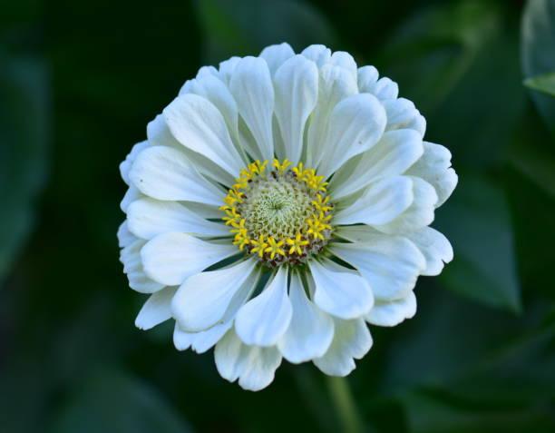 Schöne Weiße Blume – Foto