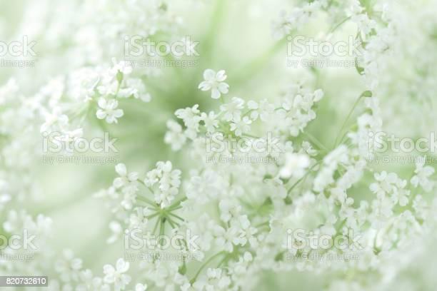Beautiful white flowers picture id820732610?b=1&k=6&m=820732610&s=612x612&h=lq7a7srf2e0buek983rvvtlfwz7 puno11wfttv0phe=