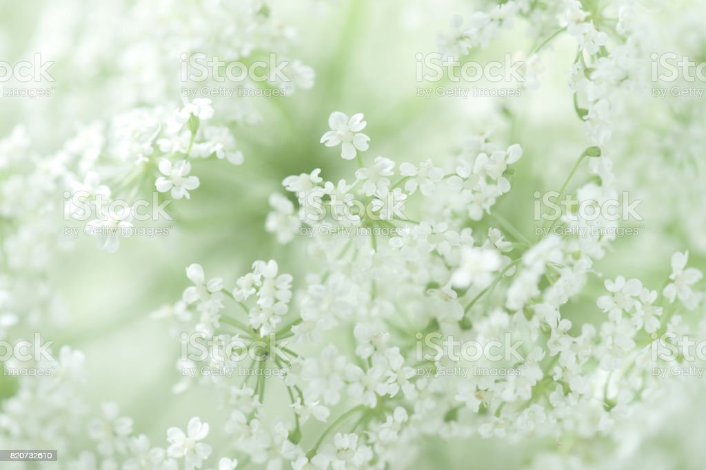 美しい白花 ストックフォト