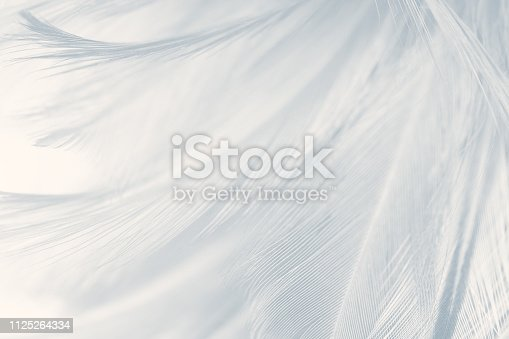 istock Beautiful white gray colors tone feather texture background 1125264334