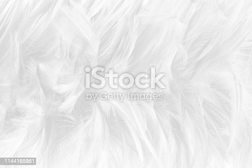 istock Beautiful white gray colors tone feather texture background 1144165951