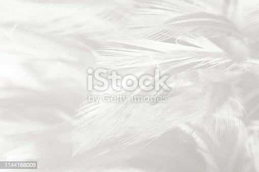 istock Beautiful white gray colors tone feather texture background 1144166009