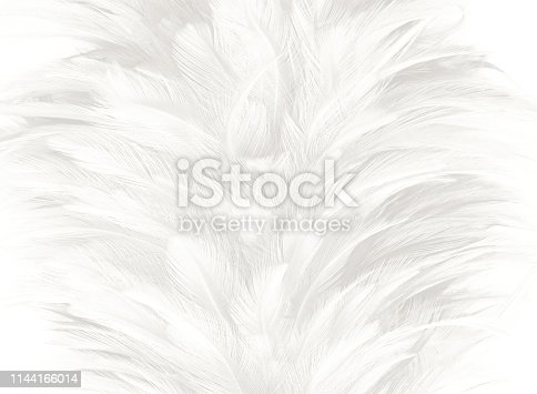 istock Beautiful white gray colors tone feather texture background 1144166014