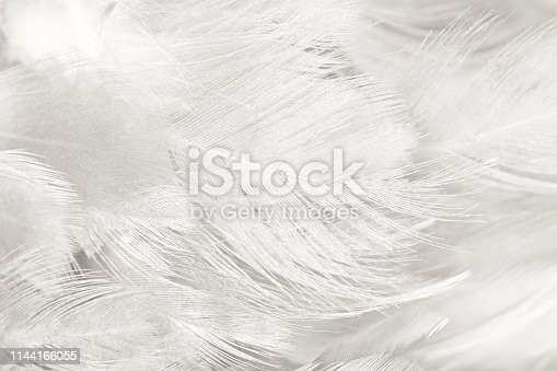 istock Beautiful white gray colors tone feather texture background 1144166055