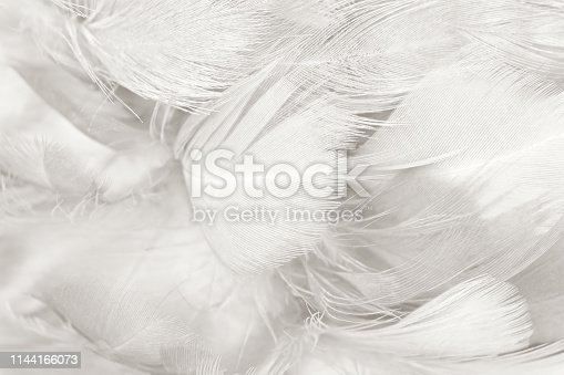 istock Beautiful white gray colors tone feather texture background 1144166073
