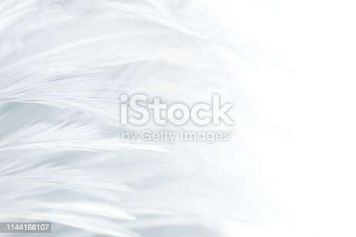 istock Beautiful white gray colors tone feather texture background 1144166107