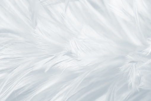 Beautiful white gray colors tone feather texture background