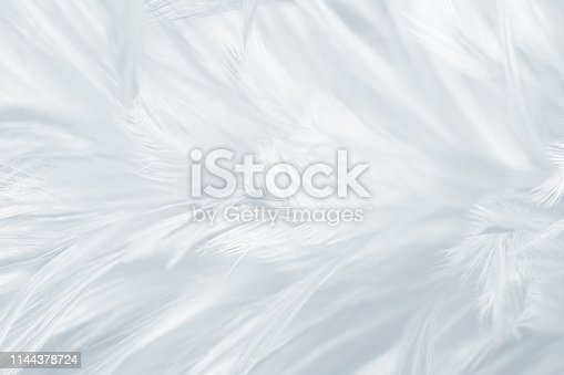 istock Beautiful white gray colors tone feather texture background 1144378724