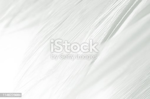istock Beautiful white gray colors tone feather texture background 1146225684