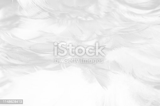 istock Beautiful white gray colors tone feather texture background 1148628413