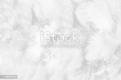 istock Beautiful white gray colors tone feather texture background 1148628425