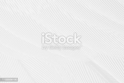 istock Beautiful white gray colors tone feather texture background 1153556150