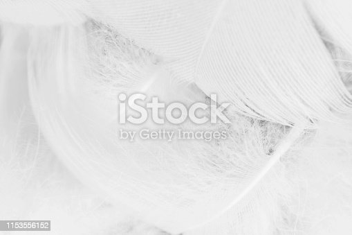 istock Beautiful white gray colors tone feather texture background 1153556152