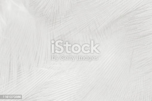 istock Beautiful white gray colors tone feather texture background 1161070386