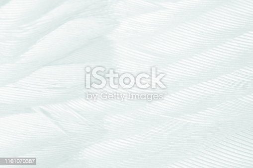 istock Beautiful white gray colors tone feather texture background 1161070387
