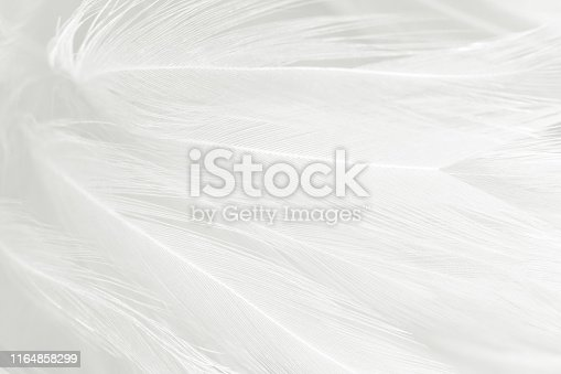 istock Beautiful white gray colors tone feather texture background 1164858299
