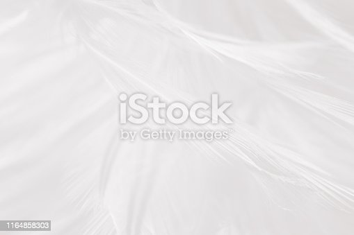 istock Beautiful white gray colors tone feather texture background 1164858303