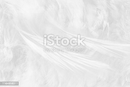 istock Beautiful white gray colors tone feather texture background 1164858311