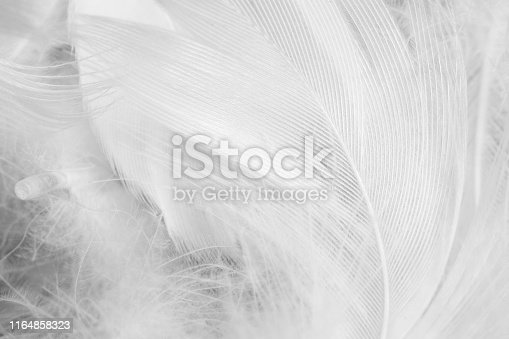 istock Beautiful white gray colors tone feather texture background 1164858323