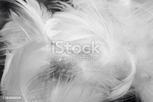 istock Beautiful white gray colors tone feather texture background 1164858326