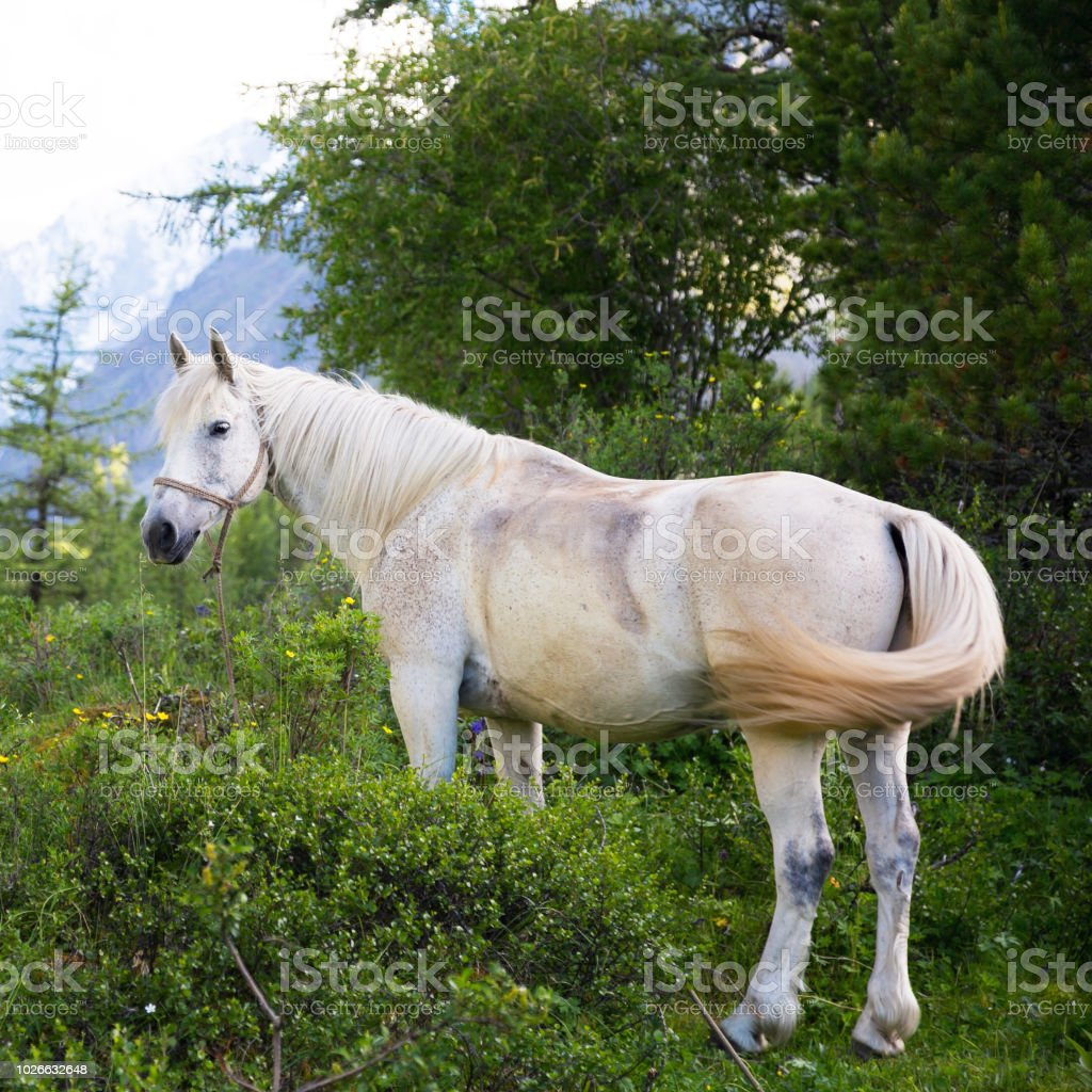 Beautiful White Horse In The Forest Stock Photo Download Image Now Istock