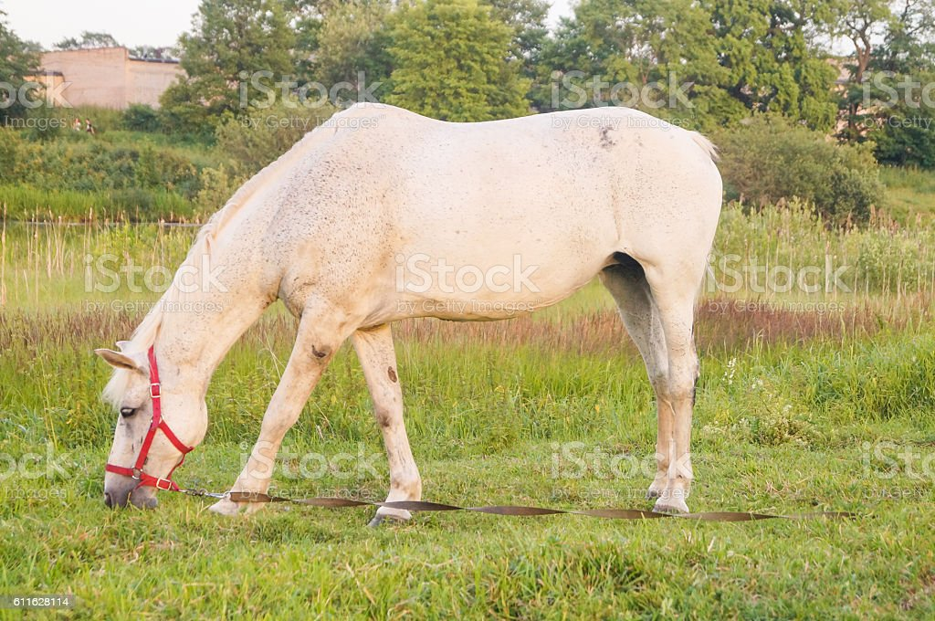 Beautiful White Horse Stock Photo Download Image Now Istock
