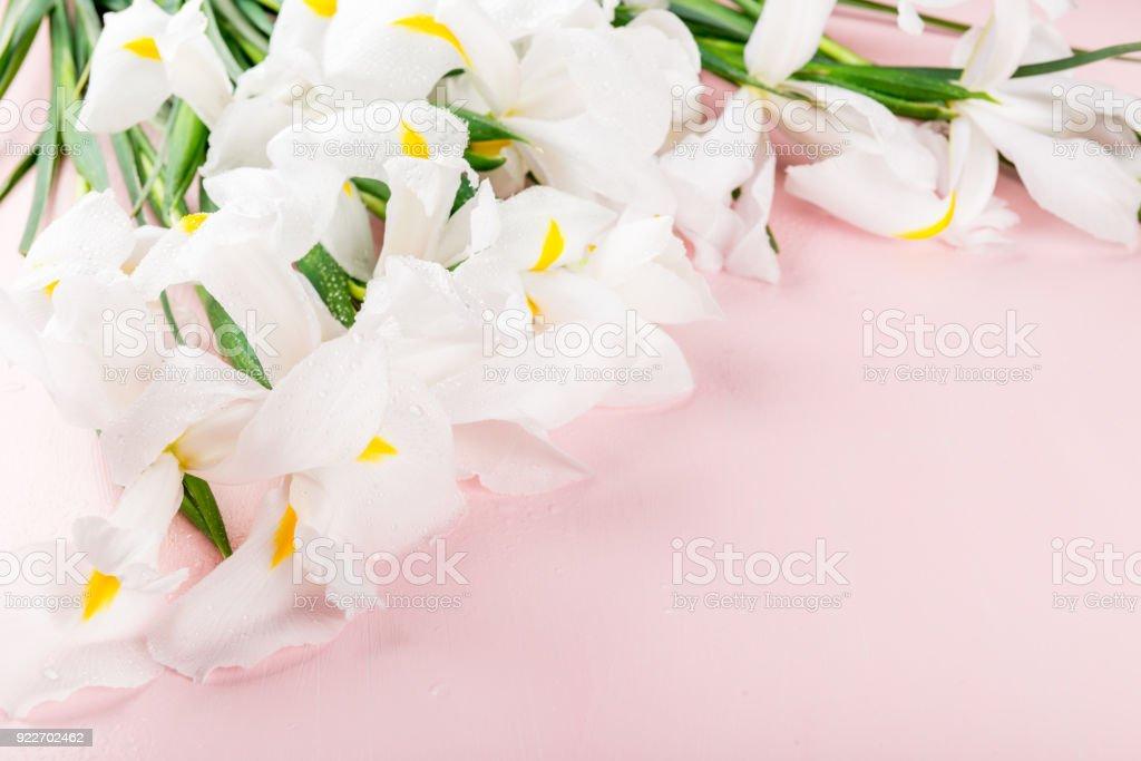 Beautiful White Iris Flowers on Pink Background stock photo