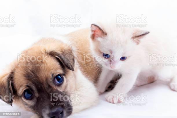 Beautiful white newborn kitten picture id1255433039?b=1&k=6&m=1255433039&s=612x612&h=orejoqjtqpa7baumv0jlbcwhb9dshsvf7mt6awu8bjo=