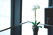 Beautiful white orchid for home decoration