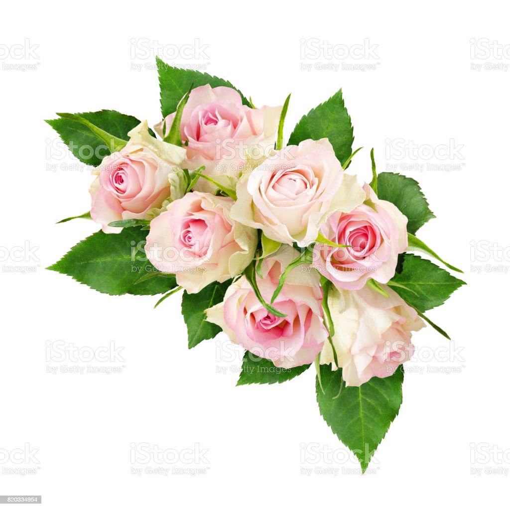 Beautiful White Rose Flowers Arrangement Stock Photo More Pictures