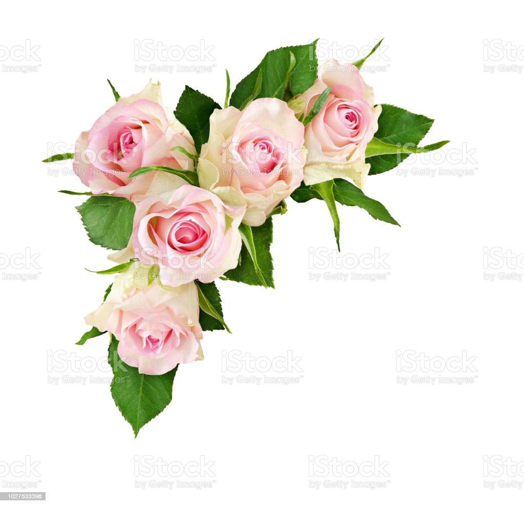 Beautiful White Rose Flowers In A Corner Composition Stock Photo