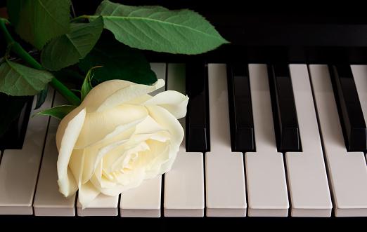 A Beautiful White Rose On The Piano Celebration ...