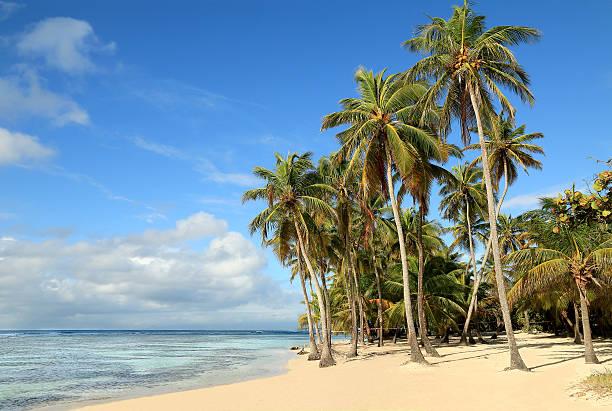 Beautiful white sand beach in Caribbean Islands stock photo