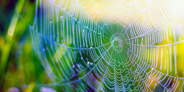 beautiful white spider web on green grass background.