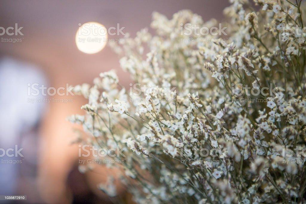 Beautiful white statice flower on the background blurred stock photo beautiful white statice flower on the background blurred royalty free stock photo mightylinksfo