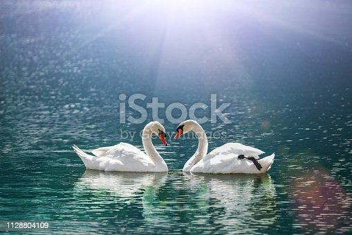 istock beautiful white swan in heart shape on lake in flare light  .Love bird and Valentine's day  concept 1128804109