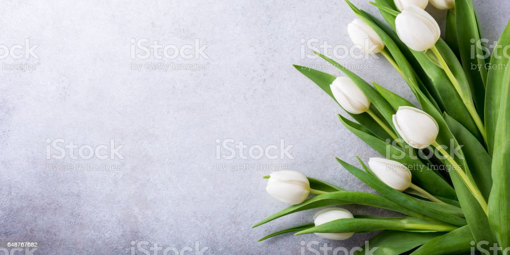 Beautiful white tulips stock photo