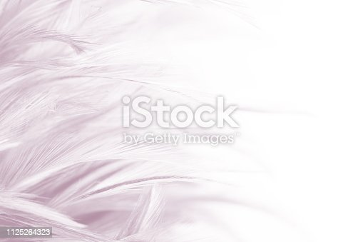 istock Beautiful white-brown purple feather texture background 1125264323