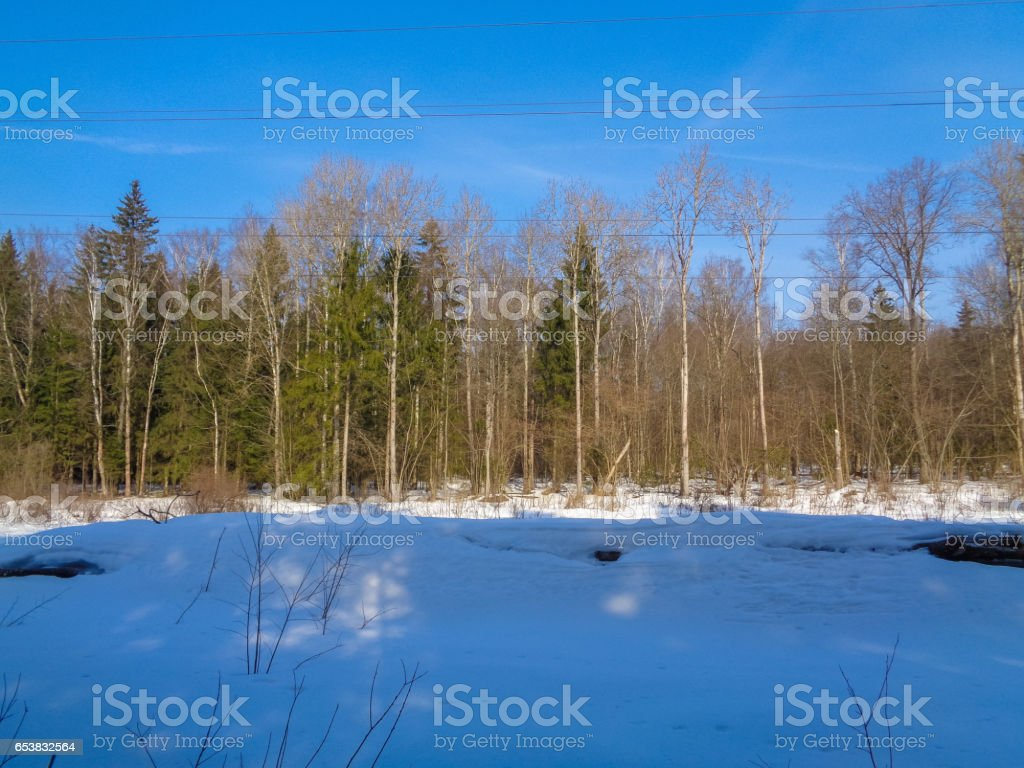Beautiful wild and quiet forest in march under the blue sky and bright sun. High resolution. Nature of Eastern Europe stock photo